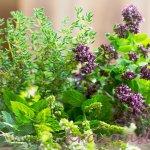 Ako založiť bylinkový záhon: Tipy na pestovanie byliniek v záhrade a na balkóne