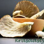 Účinky hlivy ustricovej: Jej výnimočný vplyv na imunitu dokážeš ešte posilniť