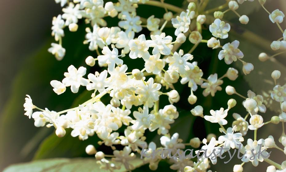 Recepty z kvetov bazy