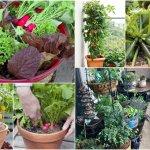 Čerstvé vitamíny? Zelenina pestovaná na balkóne môže byť riešením