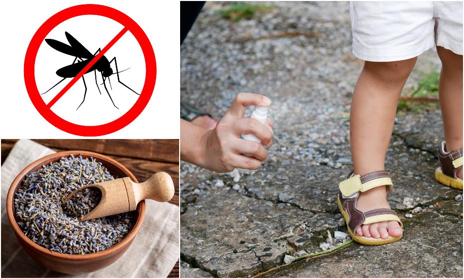 Domáci repelent proti komárom a kliešťom: Tieto bylinky to istia