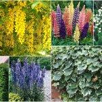 Poznáš jedovaté rastliny v záhrade? Pozor na ne!