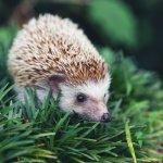 Snár: Čo znamená ježko v sne? Ostré pichliače neveštia nič dobré