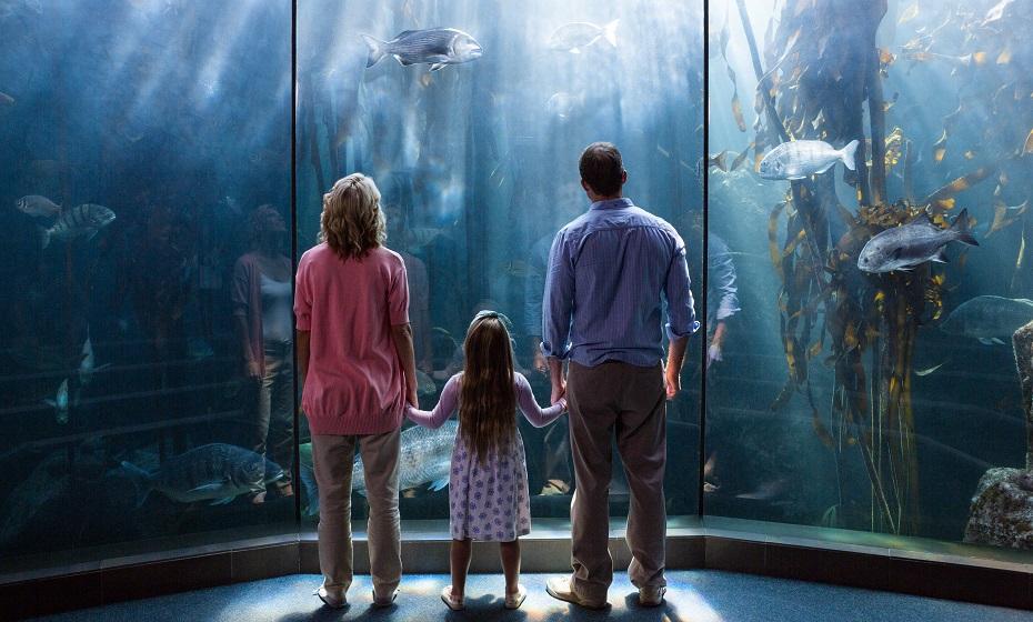 Akvárium v sne
