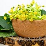 Lipový kvet: Pre tieto účinky sa zber z lipy malolistej naozaj oplatí