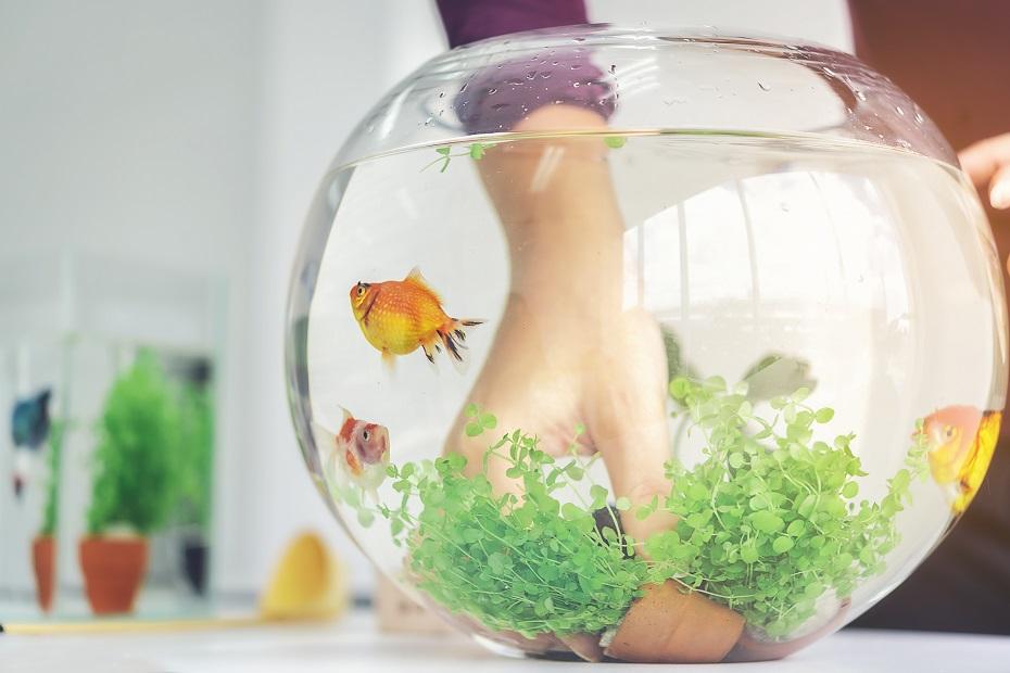 keď sa sníva o akváriu