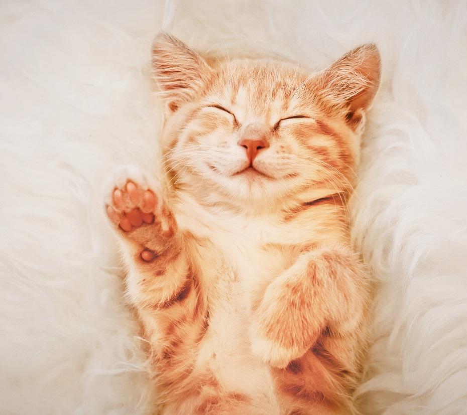 čo znamená mačka v sne
