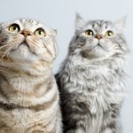 Snár: Aká mačka v sne prinesie šťastie? Sivá, biela alebo mŕtva?