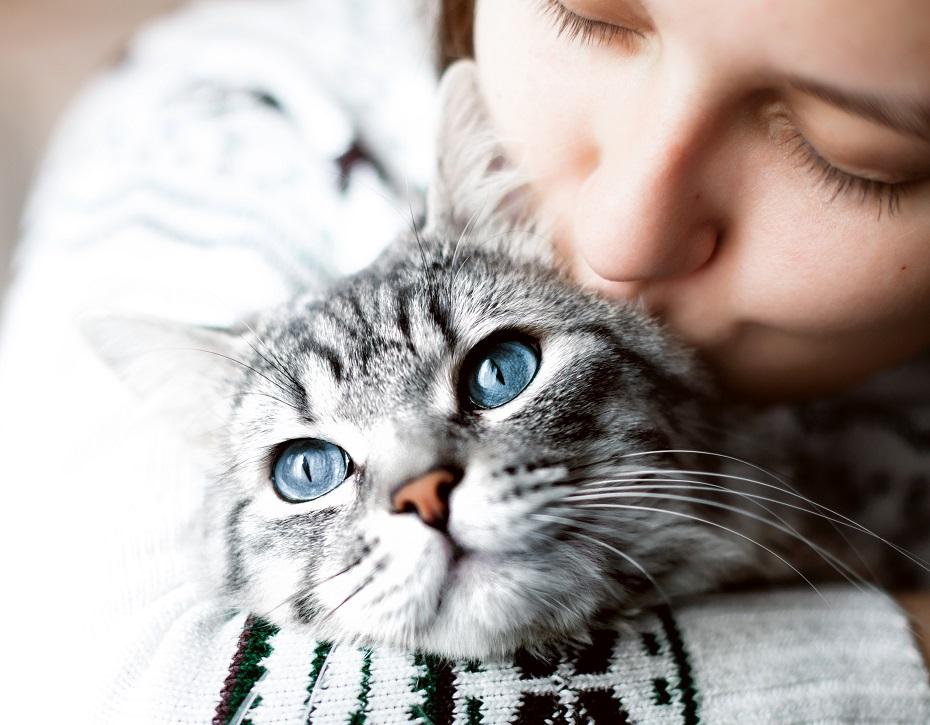 snár mačka