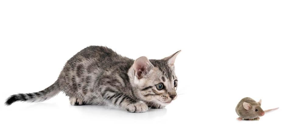 snár mačka myš
